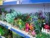 Decorativi per acquari
