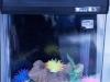 Mini acquario
