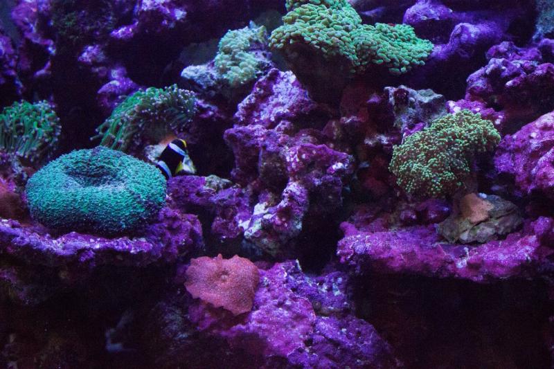 Pesci piante acquatiche e coralli negozio con prodotti for Vasche per tartarughe marine