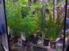 La vasca delle piante