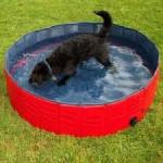 piscine per cani