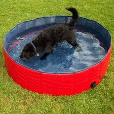 piscine per cani e gelato per caninegozio con prodotti per