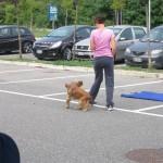 dog dance_1