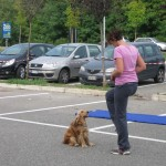 dog dance_4