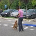 dog dance_6