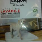 pannoloni2